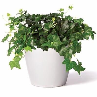 Растения-пылесосы.