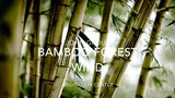 NATURE SOUNDS Relaxing Nature Sound Of Bamboo In The Wind (No Music)
