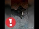 InShot_20180224_195039902.mp4