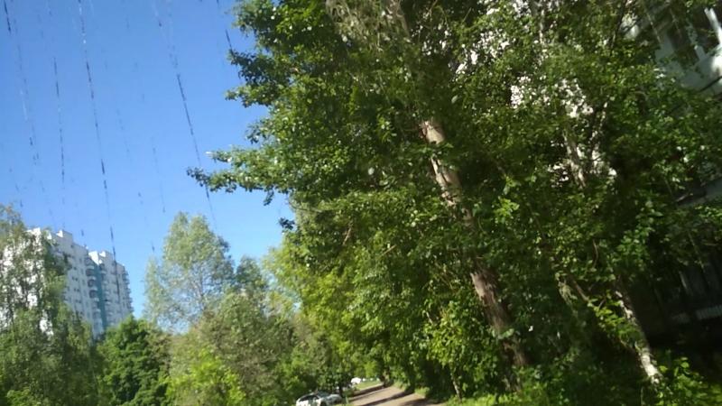 миграция гусениц или ЭКО проблема Москвы 2