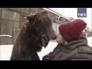 Медведь прогуливает своего дрессировщика по улицам Москвы
