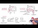 Носовые кровотечения | Клиническая анатомия в схемах