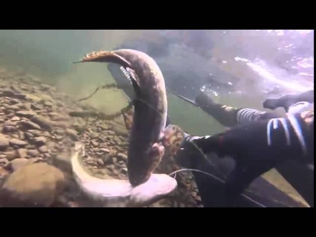 Подводная охота Как охотиться на налима голыми руками 2 03 2014