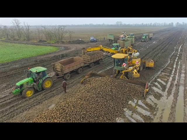 ROPA EURO MAUS loading sugar beet - 11X John Deere Tractors Claas Axion Rába Steiger