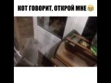 Кот говорит ОТКРОЙ МНЕ