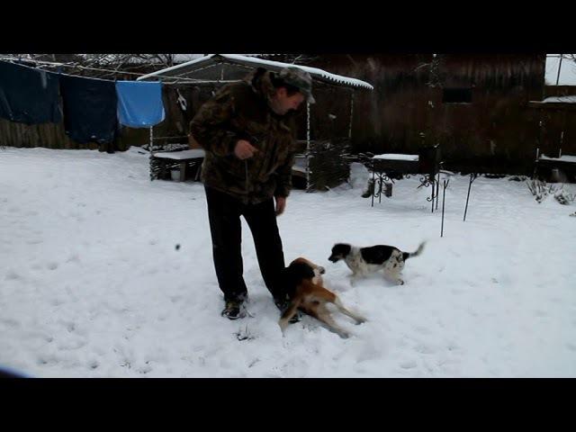 В семье Купцовых города Костюковичи живет поющая собака