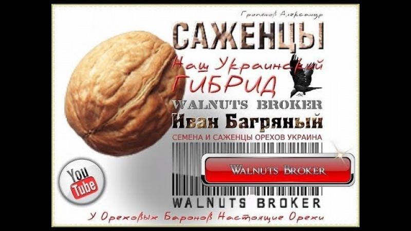 Грецкий орех Иван Багряный, 0985674877, 0957351986, Walnuts Broker