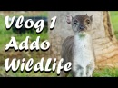 Vlog 1 Addo Wildlife and Lifestyle Center - The Daily Vlogger in Afrikaans