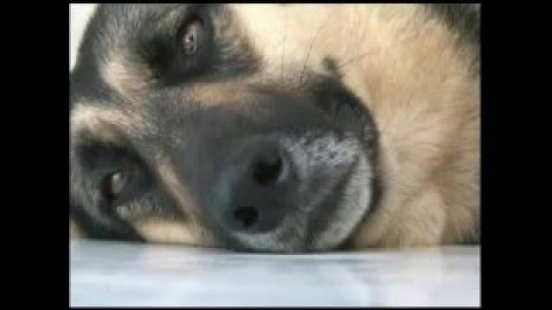 Cão Visita Túmulo do Antigo Dono a 3 anos
