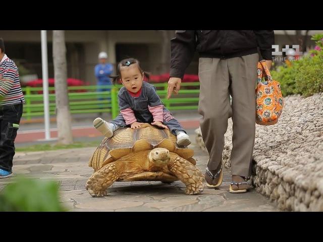 Япония: жуткие традиции прошлого и тайны индустрии для взрослых. Мир наизнанку - 4 серия, 9 сезон