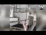 КОРОЛЬ Турника и брусьев - Andrea Larosa - ЧЕМПИОН Street Workout Мотивация.mp4
