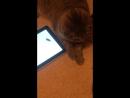 Как мой кот играет в планшет