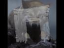 Собаки как из доисторического волка получили пекинеса