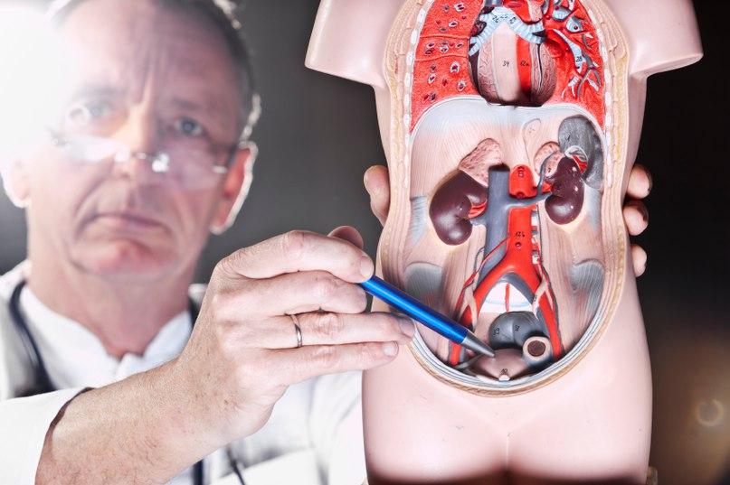 индекс здоровья предстательной железы phi