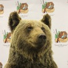 """Отдых у """"Бурого Медведя"""""""