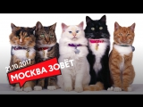 21.10 | МОСКВА ЗОВЁТ на выставку кошек!
