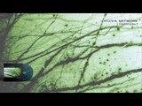 H.U.V.A. NETWORK - Distances - 06 Indigo Room