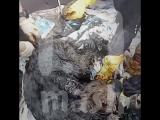 Под Псковом трёх собак пытались утопить в гудроне