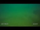 Феодосия, Золотой пляж. маленькая медуза.