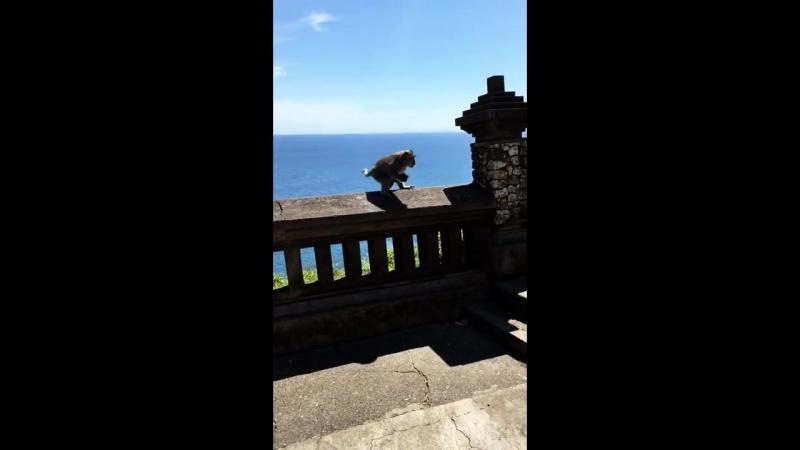 Cheeky Monkey Steals Phone __ VIralHog