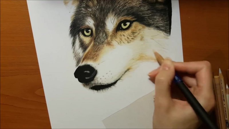 Speed Drawing of a Wolf in the Forest - Jasmina Susak.mp4