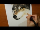 Speed Drawing of a Wolf in the Forest Jasmina