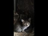 17 вольер, котята 17.05.2018