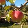Плодовый и декоративный сад. Обрезка и формирова