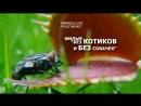 Фильм без КОТИКОВ и БЕЗ собачек Венерина Мухоловка Venus flytrap Horror 2018