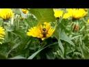 Пчелка труженица🐝