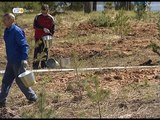 В регионе высадили более 50 тысяч молодых деревьев