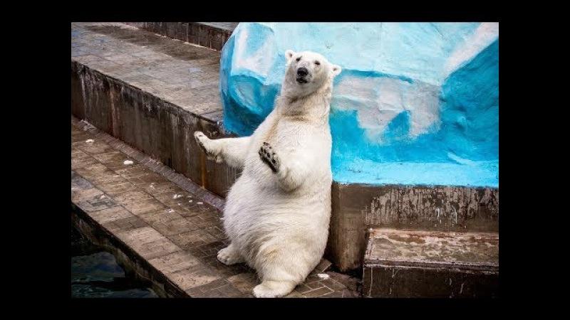 ☆ ВЛОГ Новосибирский ЗООПАРК 🐼 Детские развлечения в зоопарке / Видео для детей про животных