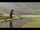 Видео к фильму Медведь (1988) Трейлер