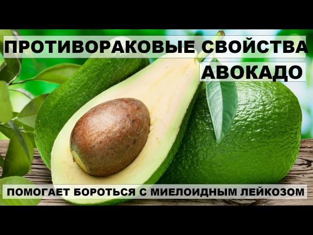 ПРОТИВОРАКОВЫЕ СВОЙСТВА АВОКАДО. Как правильно употреблять авокадо