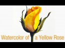 Step-by-step watercolor painting of a yellow rose bud