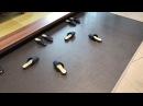 ロボット靴 Autonomous Robot Shoes Japan
