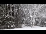 winter forest ( R.O Robot Love)