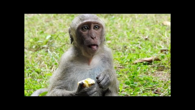 Poor Baby Monkey Eating Food So Lovely
