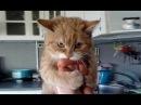 Смешные кошки приколы про кошек и котов 2017 47 Funny Cats – Самое смешное TOP