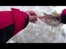 Зимняя рыбалка с палаткой в дождь! Рыбалка на жерлицы! Ловля щуки и окуня!