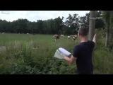 El encantador de vacas