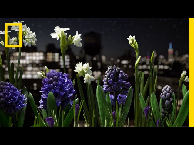 Watch a Garden Come to Life in This Absolutely Breathtaking Time-Lapse   Short Film Showcase