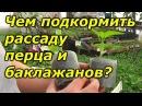 Перец и баклажаны - важная подкормка рассады!
