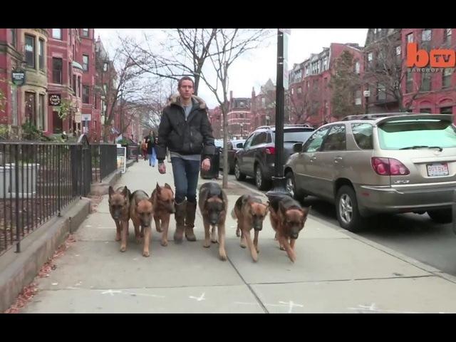 Шли по улице овчарки, Ровным строем в такт битов, Им плевать что на них смотрят - И пугают всех котов