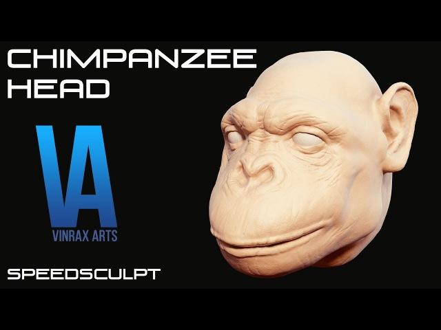 Blender 3D Chimpanzee Head Speedsculpt