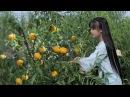 黄桃罐头:炎炎夏日,来罐冰镇黄桃罐头怎么样?