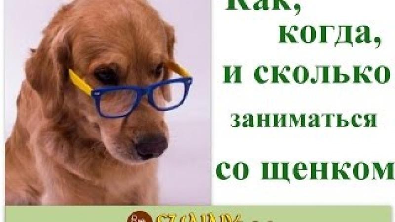 график обучения щенка и построение дрессировки щенка