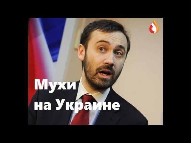 Мухи на Украине Одесское Общественное Телевидение