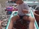 Ест клубнику и черешню