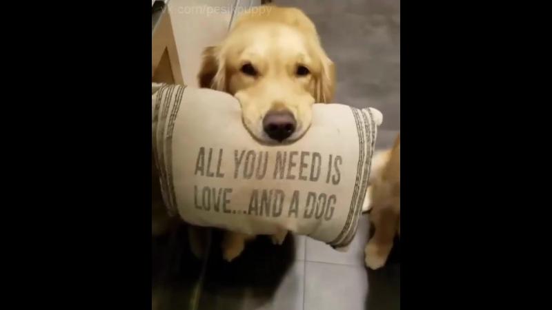 Пёська-любовь